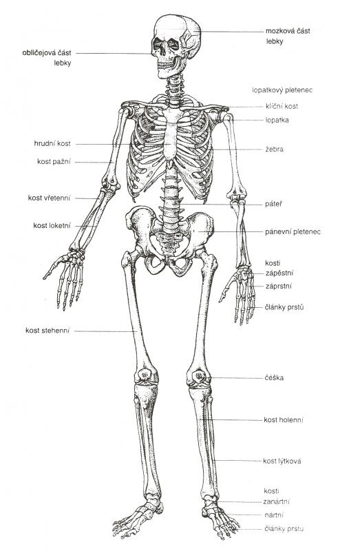 Interesting Facts About Human Body En Human Anatomy Human Body
